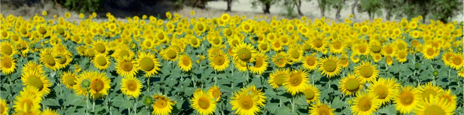 Flora_panoramica